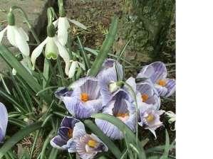 flori-de-primavara-22_2b0f48a9facfd1